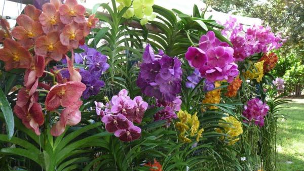 Plant-A-Palooza: Annual Spring Plant Sale